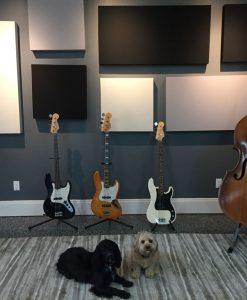 Eric Johnson GIK 242 Acoustic Panels Bass and Dogs