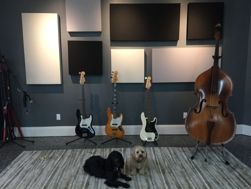 Eric Johnson GIK 242 Acoustic Panels Bass and Dogs
